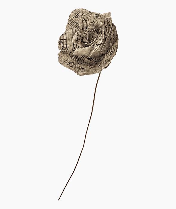 Rosa juta pentagramma 45 cm