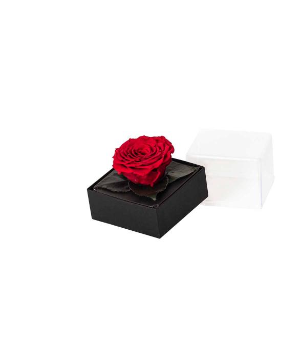 **Gift box rosa rossa stabilizzata 11x11x10 cm**